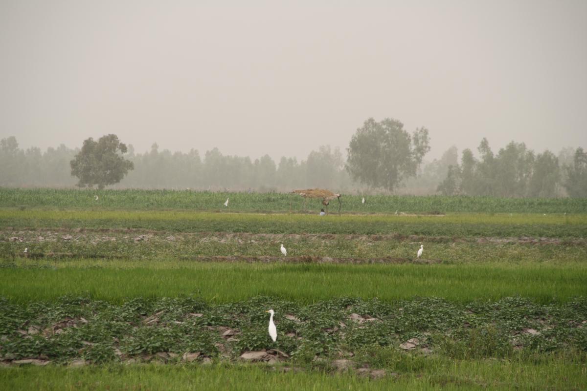 Bama_Fields_Birds